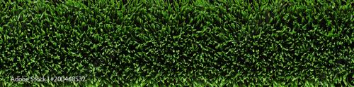 Overhead view of fresh green grass