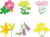 野の花 - 200485194