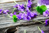 Produkte aus Veilchen - Viola; Duftveilchen; Blüten; Kräuter; Naturheilkunde; Medizin; Homöopathie;  - 200498366