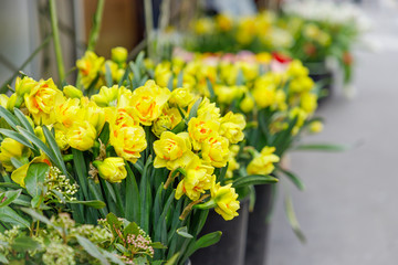 Flower shop in Paris, France. Spring yellow daffodils