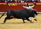animal tradicional español