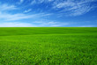 Green grass field - 200538741