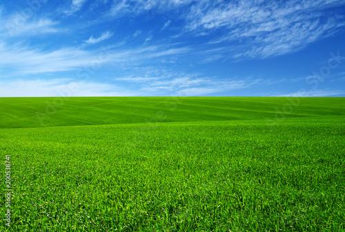 Green grass field - 200538741