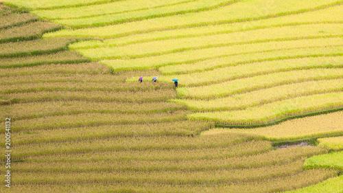 Fotobehang Zwavel geel Rice fields on terraced of Mu Cang Chai , Vietnam.
