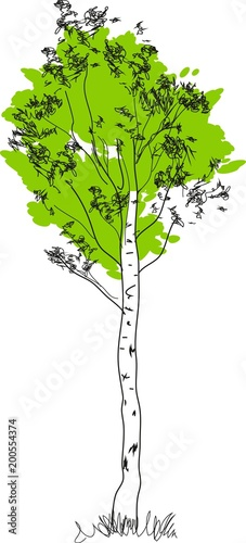 Stylized birch tree with green crown and white trunk - 200554374