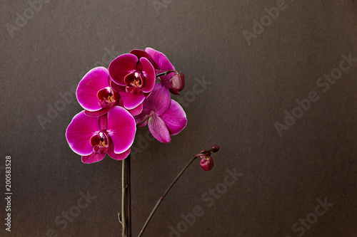 Pink orchid on a black background - 200583528