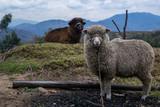 encontrando la lana - 200592547