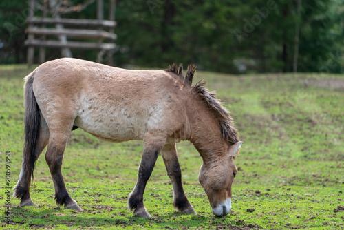 Fotobehang Paarden Wildpferd