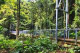 DNP Rainforest Bridge Side