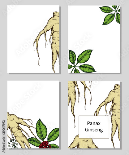 templates with hand drawn Panax Ginseng.