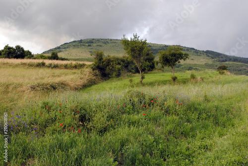 Łąki, drzewa i wzgórze w lato chmurnym dniu