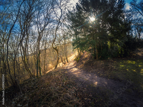 Foto Murales Footpath into the deep German forest in springtime