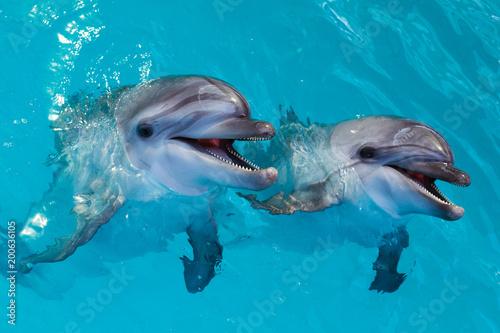 Aluminium Dolfijn Group of cute smart dolphins in the ocean