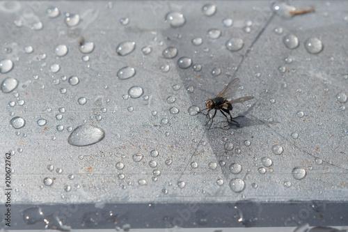Foto Murales Fliege Insekt