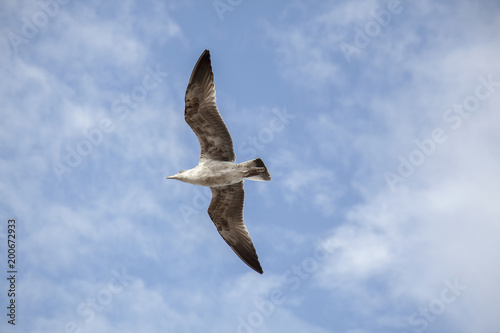 Foto Murales Flying seagull
