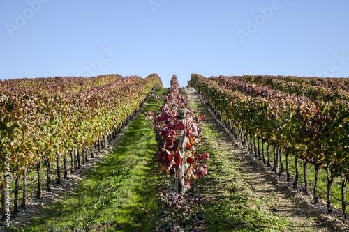 Deurstickers Wijngaard vineyard, grapes, wine portugal