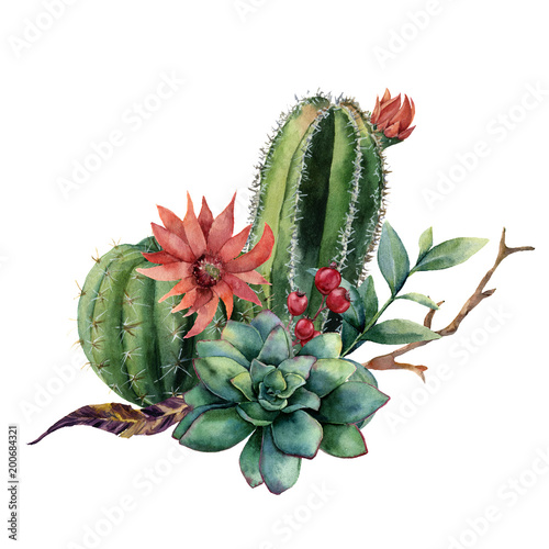 Watercolor cactus bouquet. Hand painted cereus with red flower, green succulent, berries and treebranch with leaves isolated on white background. Illustration for design, print, fabric or background. - 200684321
