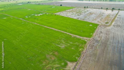 Plexiglas Grijs Aerial view from flying drone of Field rice with landscape green pattern nature background / top view field rice