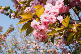 beautiful spring flowers - 200714912