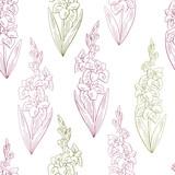Gladiolus flower graphic color seamless pattern background sketch illustration vector - 200716992