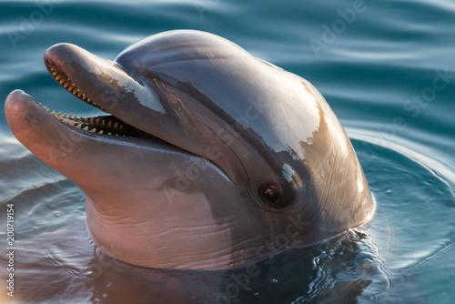 Fototapeta At Dolphin Reef in Eilat