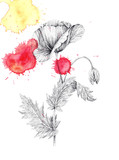 Poppy flower and colored blots, ink drawing, tattoo - 200724311