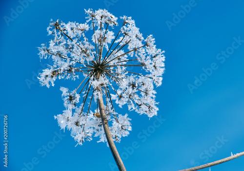 Foto Murales Crystal snow-flowers against the blue sky.
