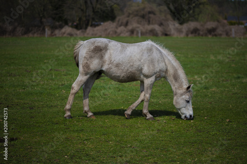 Fotobehang Paarden Horse eat in the spring on the meadow
