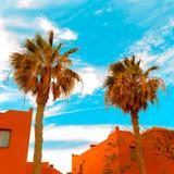 Fashion palm location. Canary island. Travel life - 200747503