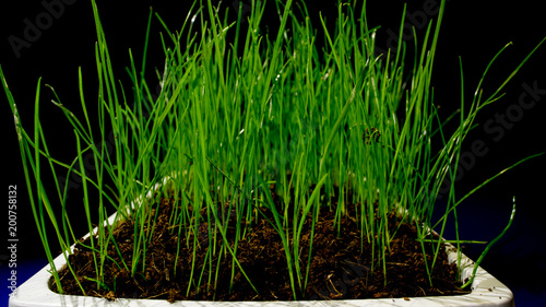 green grass in flower pod
