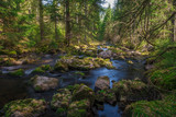 Some stream in the Black Forest, Germany, 2018, Schwarzwald
