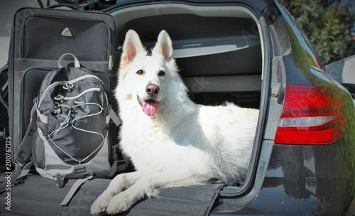 Z samochodem i psem na wakacjach