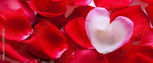 Foto Murales Red rose petals .Valentines day background.