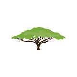 Acacia tree illustration - 200775375