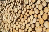 Holzernte in den bayerischen Alpen