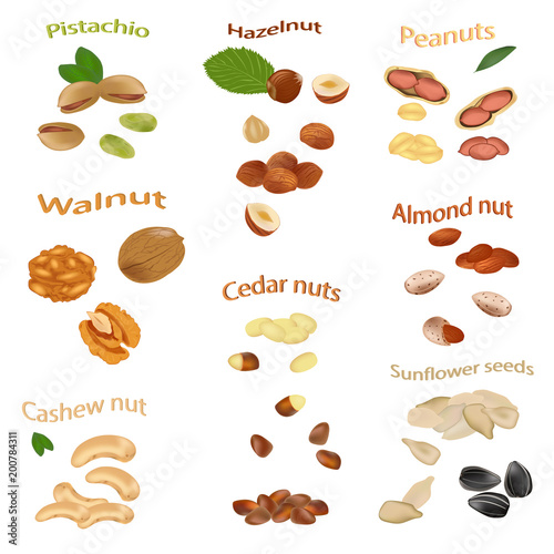 Set of nuts isolated on white background. Peanuts, cashews, hazelnuts, walnuts, sunflower seeds, almonds, pistachios, cedar nuts. Vector illustration.