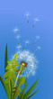 Dandelion against blue sky. Plant, blossom, meadow. Flower concept. Can be used for topics like flora, botany, summer