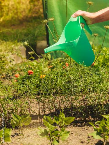 Foto Murales woman watering plants in garden