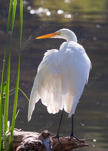 Foto Murales Heron on backlighting