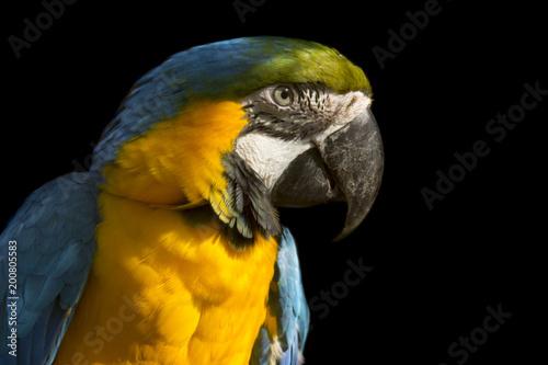Plexiglas Papegaai Ara Parrot