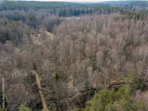 drone image. aerial view of endless forests