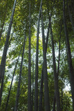 Dark bamboo forest, vertical background