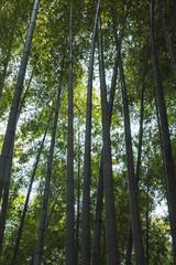 Dark bamboo forest, vertical background