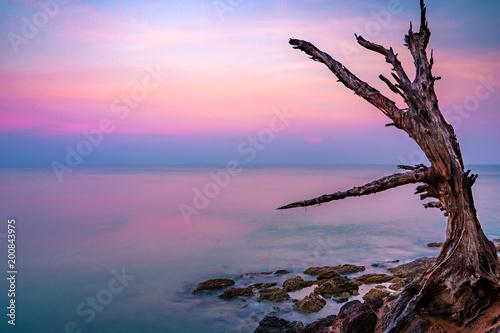 Fotobehang Zee zonsondergang Beautiful landscape of a dead tree with a stunning sunrise at Andaman sea of Koh Lanta in Krabi, Thailand