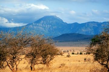 Savannah landscape in the National park of Kenya © byrdyak