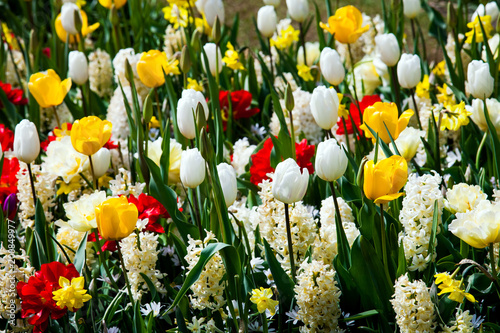 Aluminium Tulpen Colorful flowers field of white hyacinths and yellow tulips