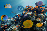 Photo of a tropical Fish on a coral reef - 200853397