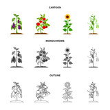 Eggplant, tomato, sunflower and peas.Plant set collection icons in cartoon,outline,monochrome style vector symbol stock illustration web.