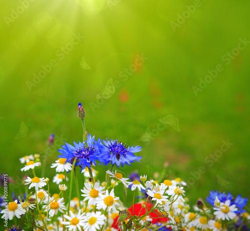 Wild flowers bouquet .