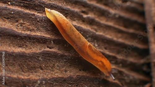 Slug crawling on a tree bark